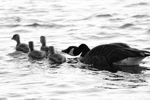 birds-1485369__340