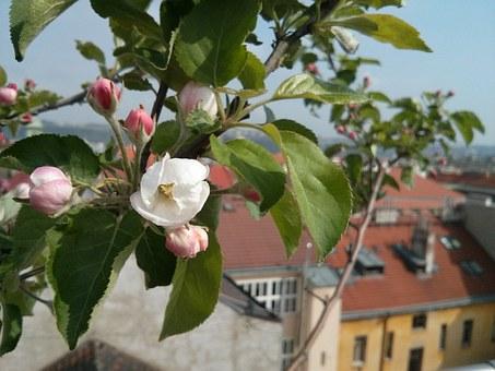 flower-115491__340