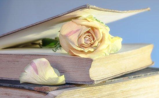 rose-2101475__340