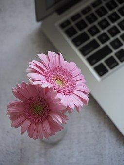 flower-3121972__340