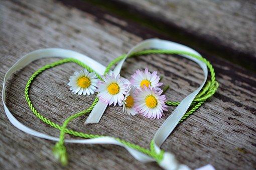 daisy-3392654__340